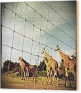Giraffes Leave Wood Print