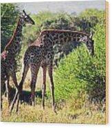 Giraffes On Savanna Eating. Safari In Serengeti Wood Print