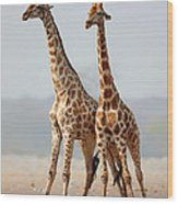 Giraffes Standing Together Wood Print by Johan Swanepoel
