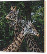 Giraffs Wood Print