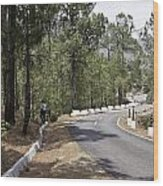 Girl On A Mountain Highway Road Wood Print