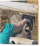 Girl Pets Donkey Wood Print