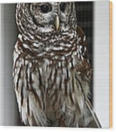 Give A Hoot Wood Print by John Haldane