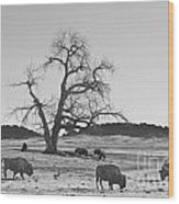 Give Me A Home Where The Buffalo Roam Bw Wood Print
