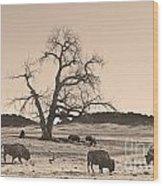 Give Me A Home Where The Buffalo Roam Sepia Wood Print