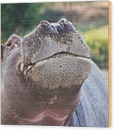 Give Me A Kiss Hippo Wood Print
