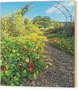 Giverny - Monet Wood Print
