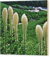 Glacier Beargrass Swiftcurrent Pass Wood Print