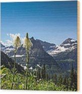 Glacier Grass Wood Print