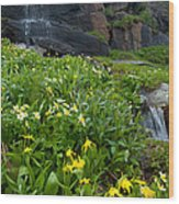 Glacier Lilies And Globeflower Beside A Mountain Stream Wood Print
