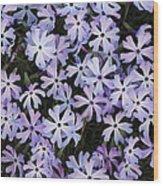 Glade Phlox Wood Print