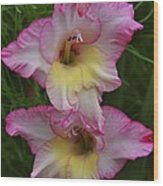 Gladiola Against Grasses Wood Print