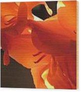 Gladiola Close Up 3 Wood Print