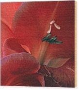 Gladiola IIi Wood Print