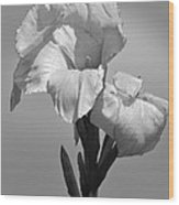 Gladiola In Black And White Wood Print