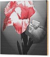 Gladiola With Heart Wood Print