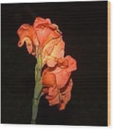 Gladiolus At Night Wood Print
