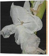 Gladiolus Past Time Wood Print