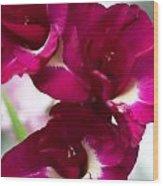 Gladiolus Priscilla. Pink Gladiolus Wood Print