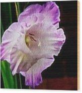 Gladiolus - Summer Beauty Wood Print