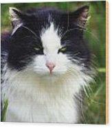 Glaring Cat Wood Print