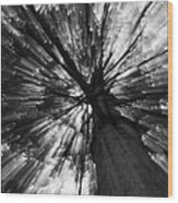 Gleam Tree Wood Print