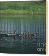 Gliding Across The Water Wood Print