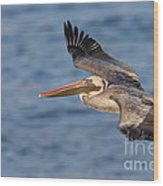 gliding by Pelican Wood Print