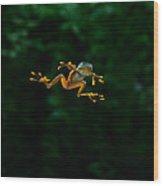 Gliding Frog In Flights Wood Print by Scott Linstead