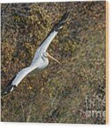 Gliding Pelican Wood Print