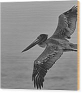 Gliding Pelican In Black And White Wood Print