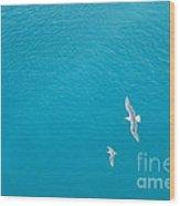 Gliding Seagulls Wood Print