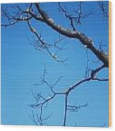Glimmering Branches Wood Print by Susan Hernandez