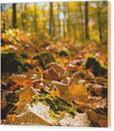 Glistening Autumn Dew Wood Print