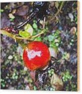 Glistening Wet Rose Hip Wood Print