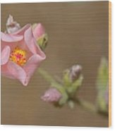 Globe Mallow Wood Print by Old Pueblo Photography