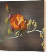 Globemallow Wood Print