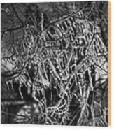 Gloomy Icy Tree Wood Print