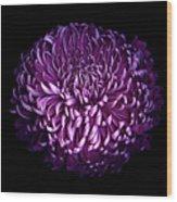 Glorious Autumn Purple Chrysanthemum Wood Print