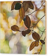 Glorious Foliage. Tree In Pamplemousse Garden 1. Mauritus Wood Print