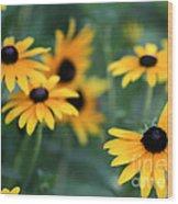 Glorious Garden Of Black Eyed Susans Wood Print