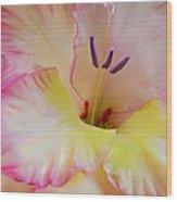 Glorious Gladiola Flower Wood Print by Jennie Marie Schell