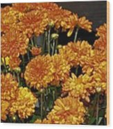 Glorious Golden Mums Wood Print