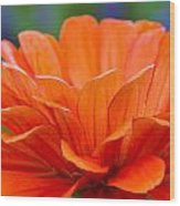 Glorious Orange  Wood Print