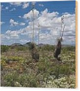 Glorious Spring In The Desert Wood Print
