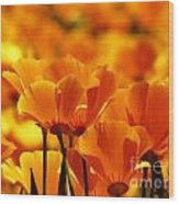 Glory Of Poppies Wood Print