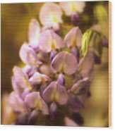 Wisteria Afterglow Wood Print