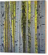 Glowing Aspens Wood Print