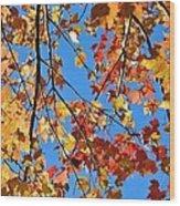 Glowing Autumn Wood Print