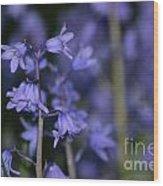 Glowing Blue Bells Wood Print